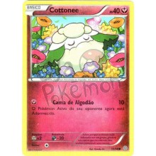 Cottonee 55/98 - Origens Ancestrais